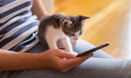 Cat videos relieve stress